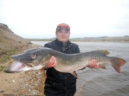 Amur pike, Onon river, Mongolia (2012)